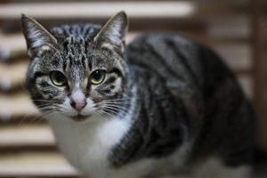 元野良猫ニコ