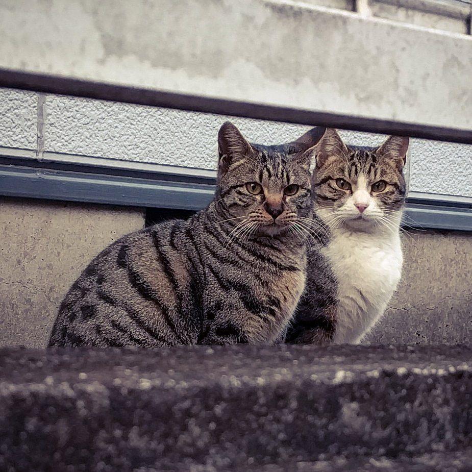 野良猫の保護