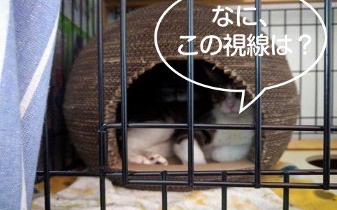 大怪我してた野良猫の保護 19日目