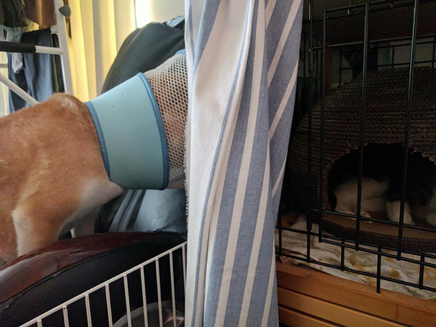 大怪我してた野良猫の保護 19日目 柴犬との同居