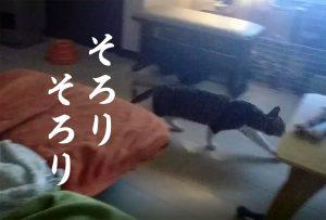 深夜のお目覚め 猫
