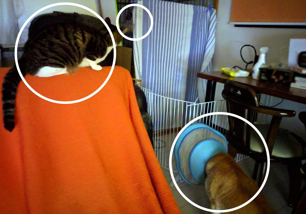 新しい猫が気になる先住犬と先住猫