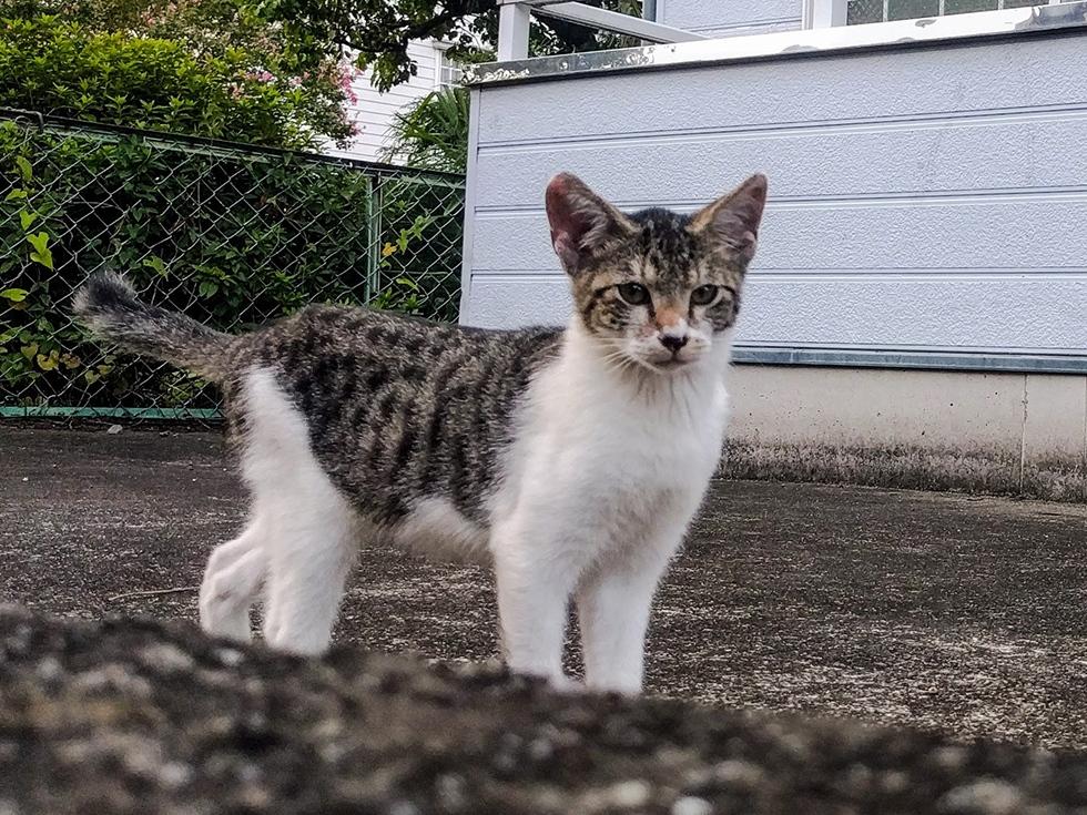 近所の野良猫 ニャンコ三兄弟