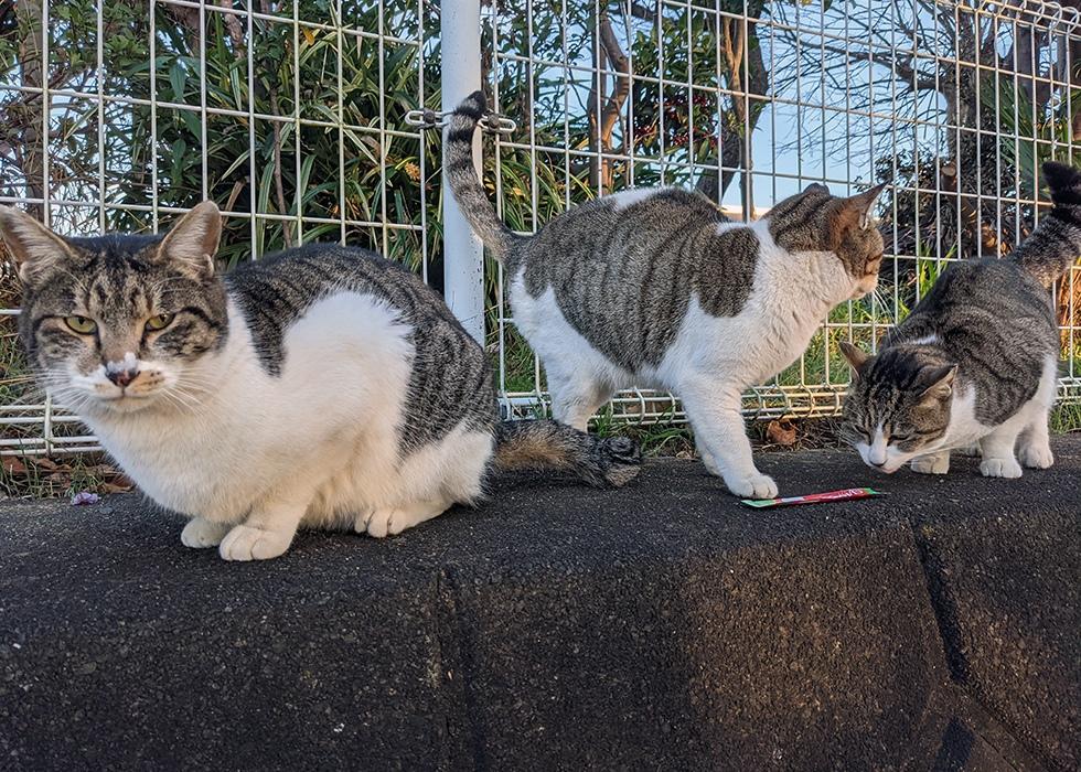 柴犬と保護猫たち-02