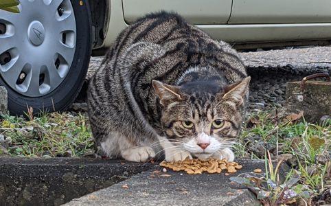 新参者の猫