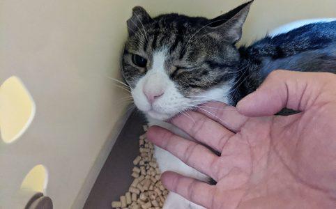 薬きらいの猫のため錠剤投与に苦戦